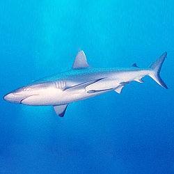 Shark Facts for Shark Week